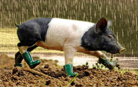 BabyPigBoots