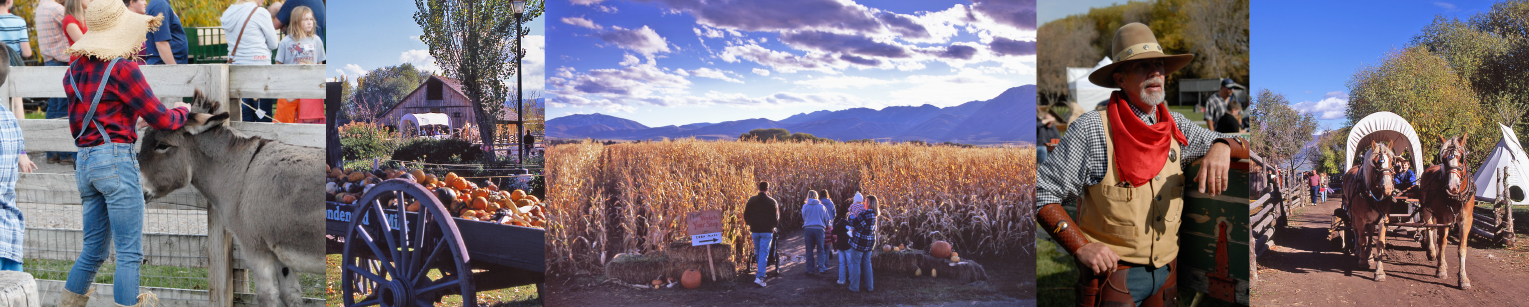 Corn Maze On The Farm